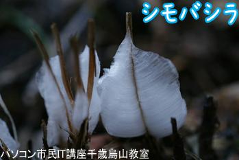 20180114_撮影サークル「高尾山シモバシラ」.png